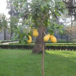 giardini_farnesina_800v_04