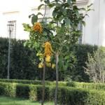 giardini_farnesina_800v_05